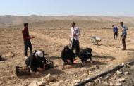 آغاز کشت زمینی زعفران در مزرعه تحقیقاتی دانشگاه آزاد اسلامی اوز(به نقل از آنا)