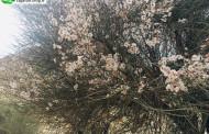 انجمن علمی فرهنگی و طبیعت گردی تاگاره اوز پیشگام در طرح هر ایرانی یک درخت