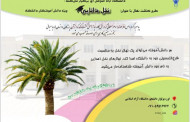دانشگاه آزاد اسلامی اوز درنکوداشت روز درخت کاری طرح کاشت نهال با عنوان نخل دانایی را اجرا میکند(به نقل از آنا)